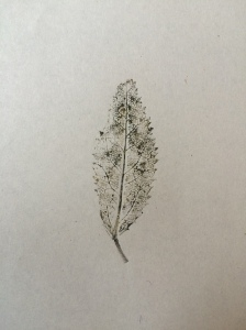 A brown and black ink print of a small leaf on paper.